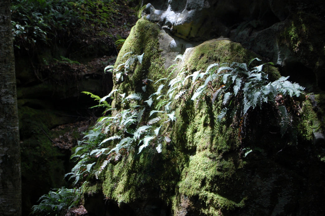You'll find moss growing on many of the rocks at Beartown State Park.