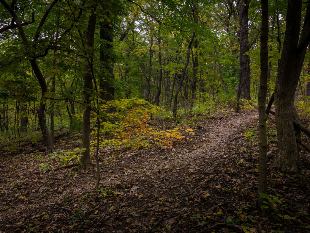 The Palos Trail System offers singletrack for trail running unlike anything else in the Chicago area.