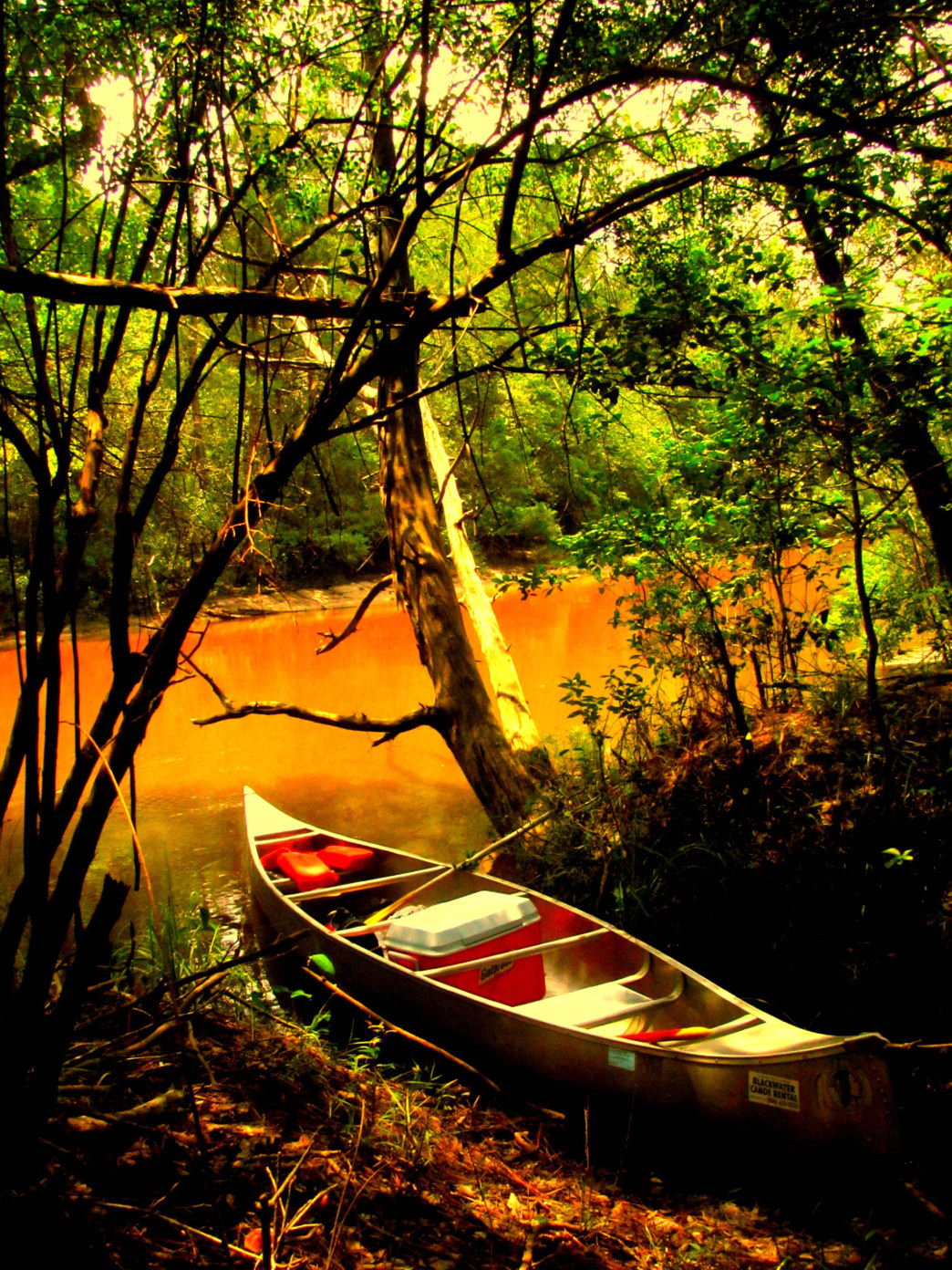 The 31-mile Blackwater Paddling Trail features the most scenic sections of the river.