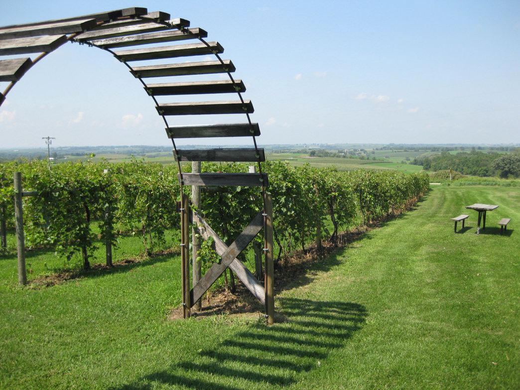 Yes, you'll find vineyards in Illinois, and a bike ride to Galena Cellars Vineyard makes for a great trip.