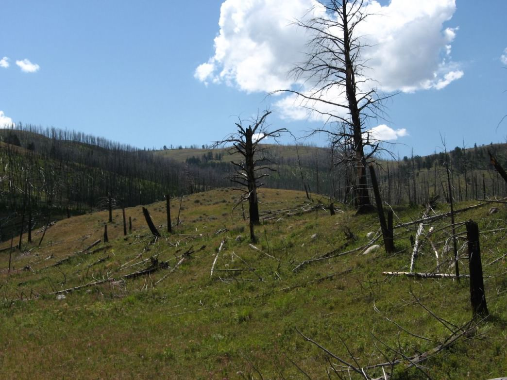 Burned hillside above Grizzly Lake