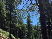 Truckee River Trail