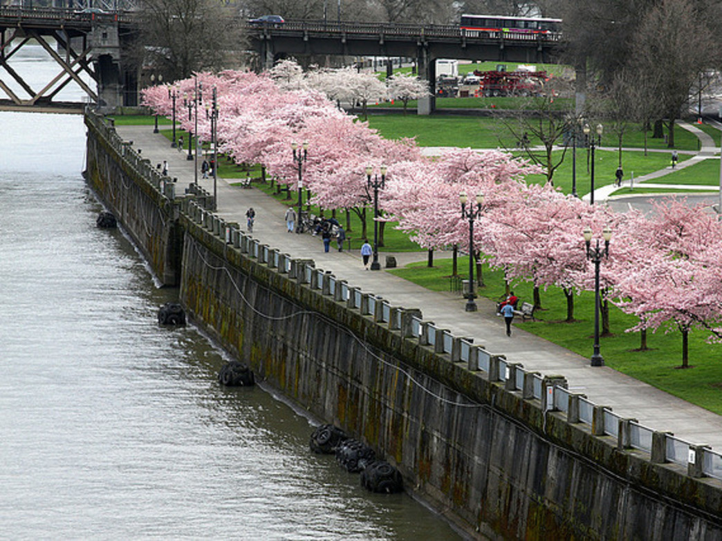 Tom McCall Waterfront Park provides a wide, paved path for runners and cyclists.