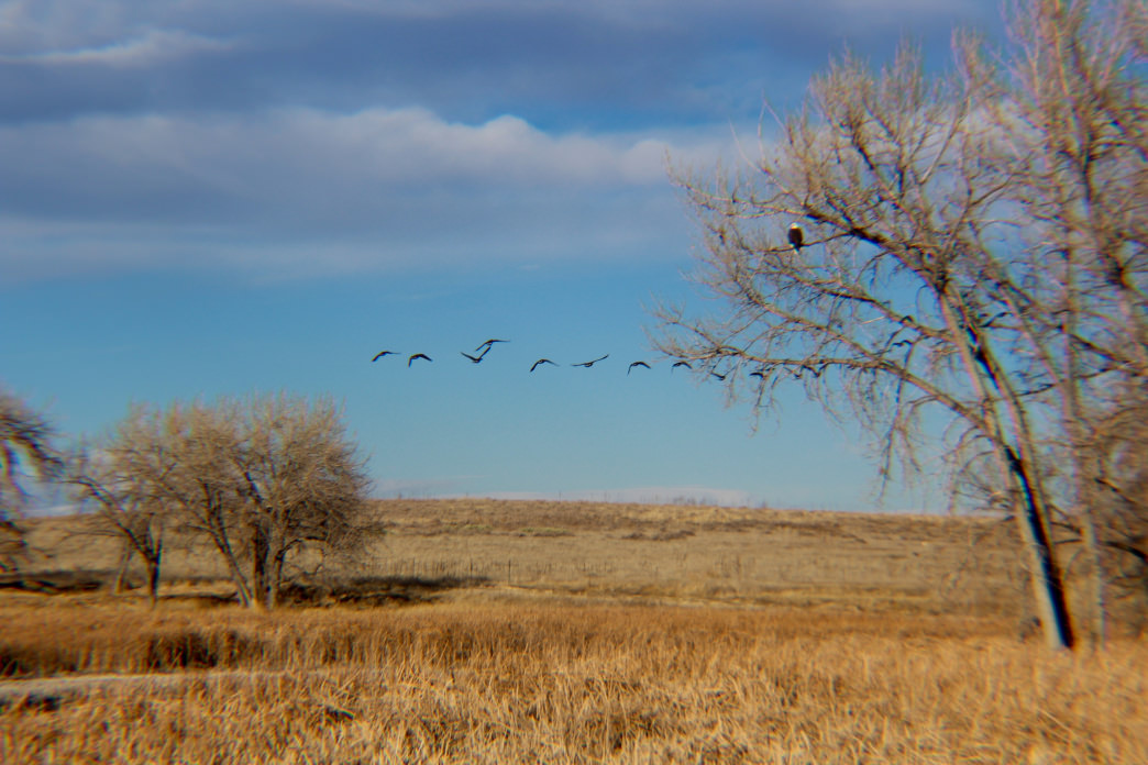 With 280 bird species, Rocky Mountain Arsenal is prime for bird watching.