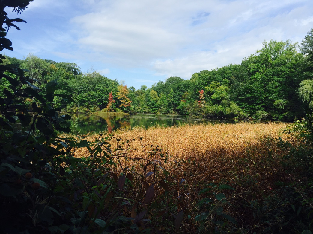 Greenbrook Nature Sanctuary in Tenafly, N.J.