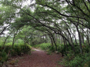 Image for Seminole State Forest Backpacking