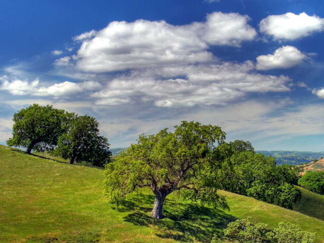 You don't have to climb all the way to the summit for fantastic views at Mt. Diablo State Park.