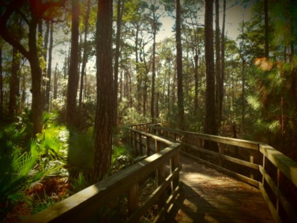 The rustling of the leaves and chatter of birds may be the only sound you hear except for your footsteps on the Centennial Trail Boardwalk in Bon Secour National Wildlife Refuge in Gulf Shores.