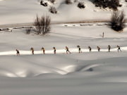 Image for Owl Creek Cross Country Skiing