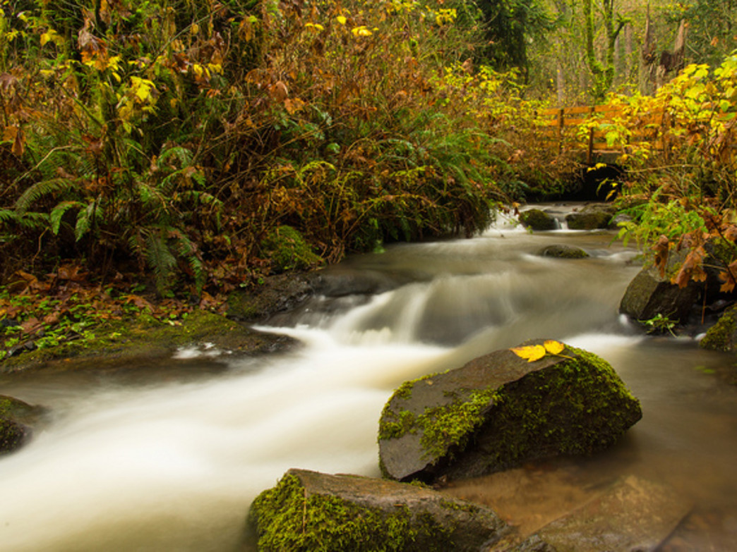 Lacamas Park offers several miles of running and hiking trails.