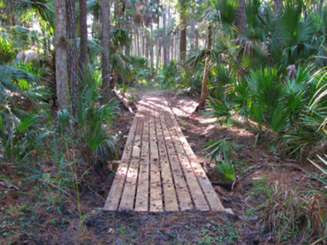 A prehistoric walk in the woods along the Florida Trail