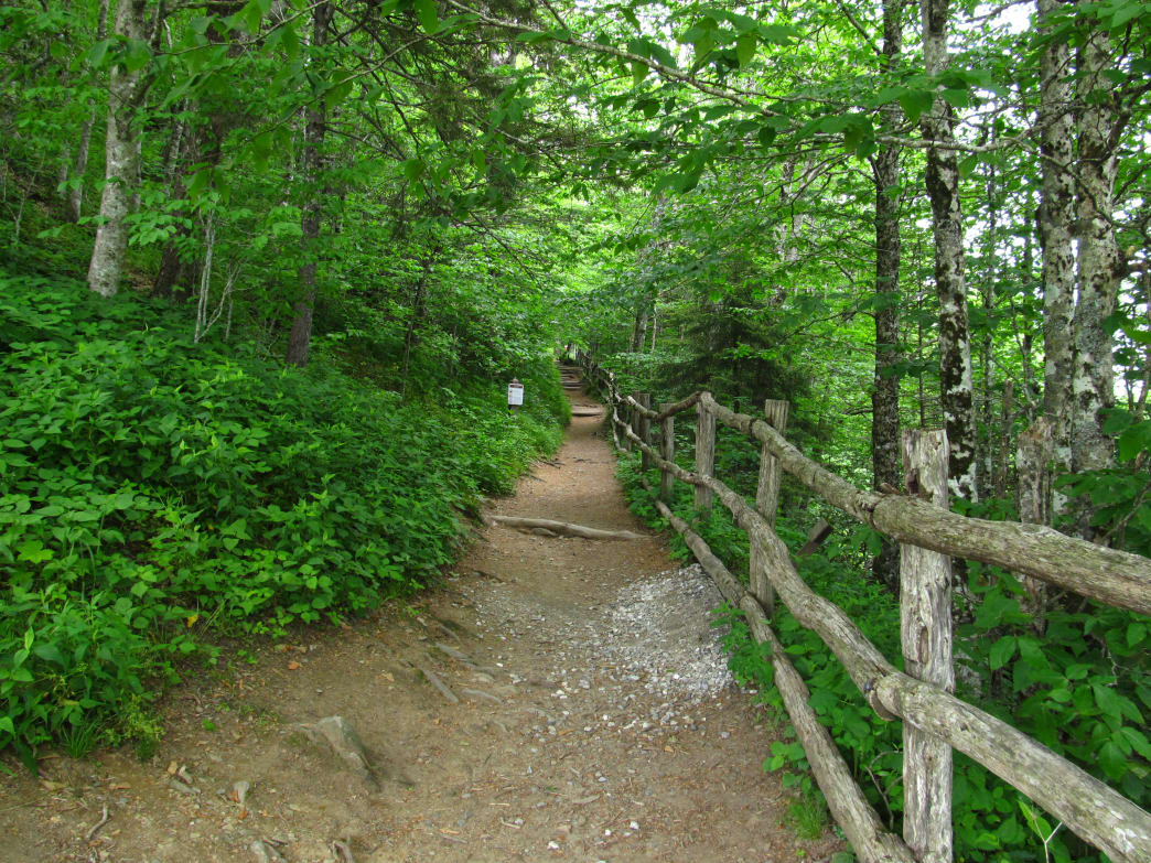 Begin your trek with a climb through spruce-fir forest at Newfound Gap.