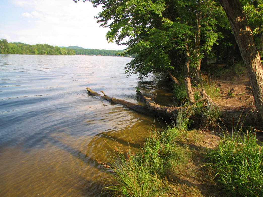 Paddle Lake Tillery from the boat launch in Morrow Mountain State Park. Gerry Dincher