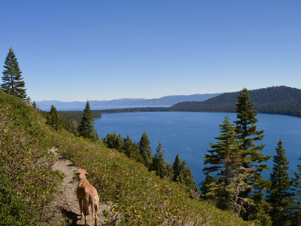 Many South Tahoe eateries and breweries are trail dog-friendly.