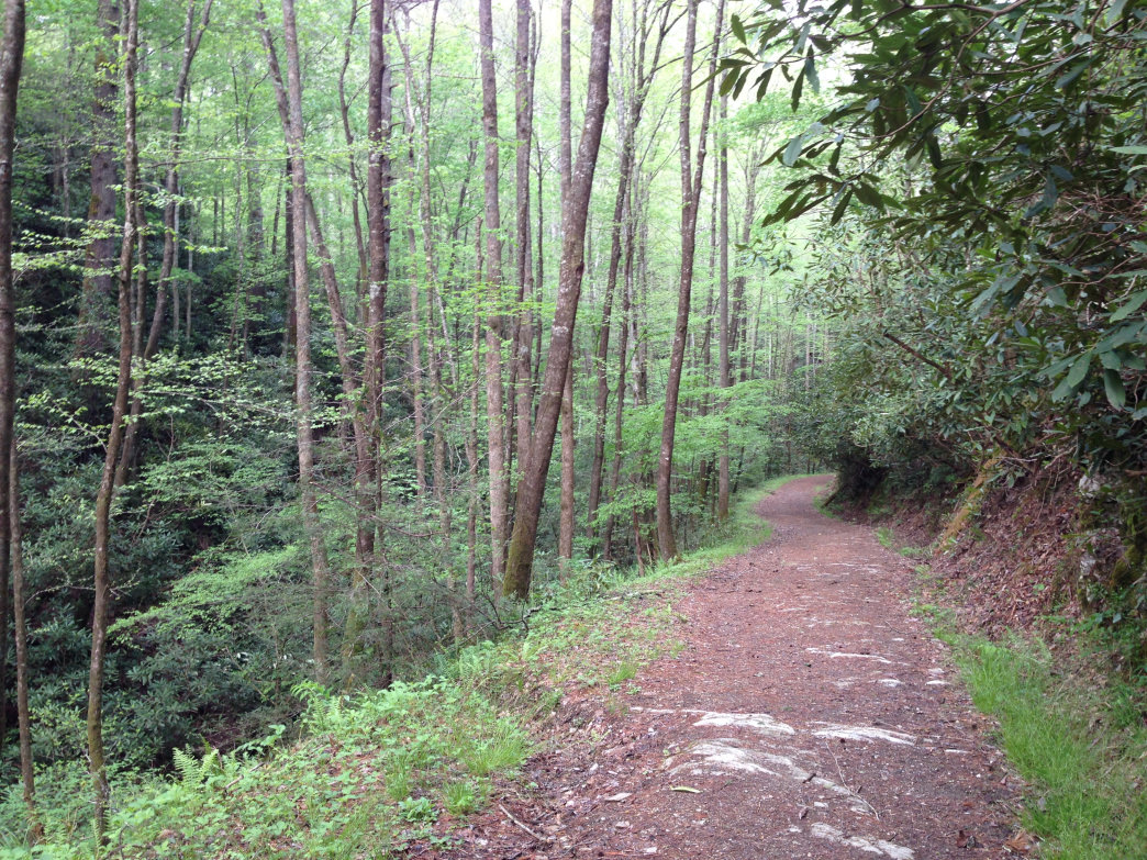 The Bote Mountain Trail travels through hardwoods and mountain laurel on its way to Spence Field on the Tennessee-North Carolina state line.