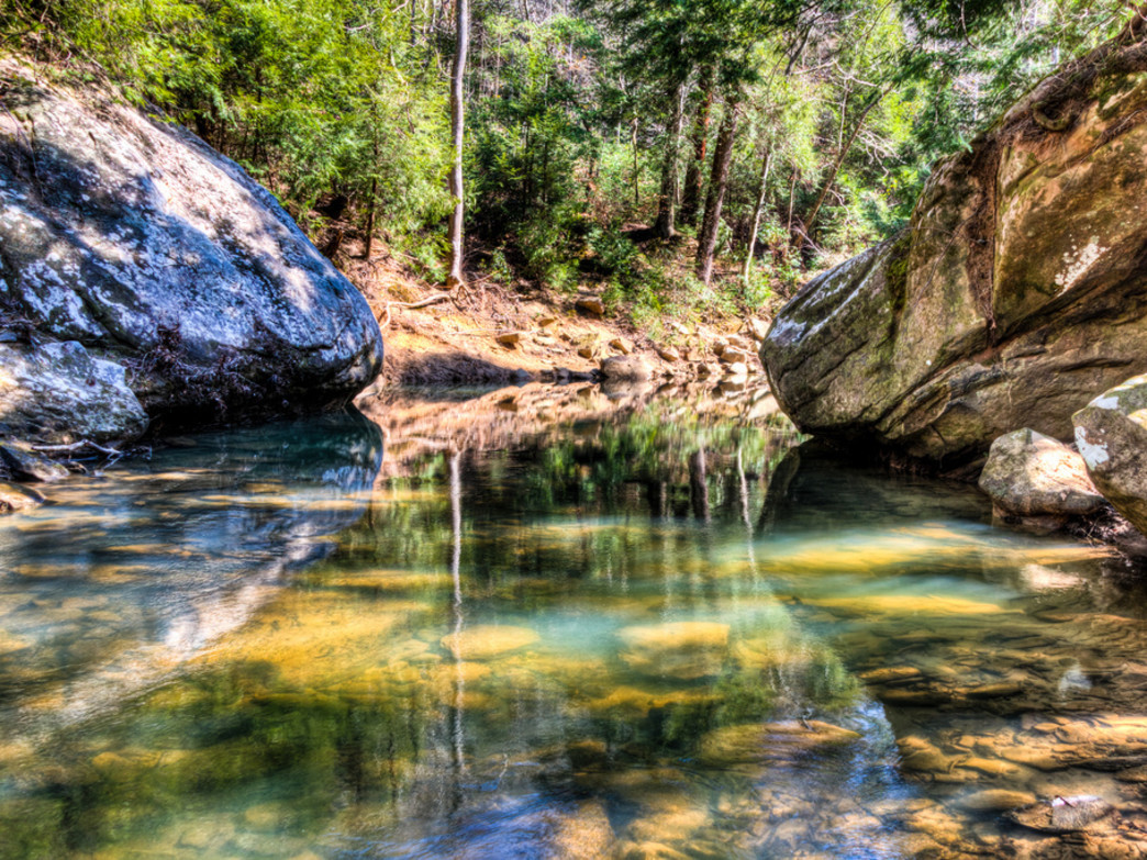 Along with wildflowers, waterways through the Sipsey Wilderness are just as scenic.