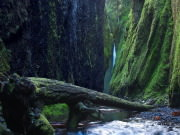 Image for Oneonta Gorge