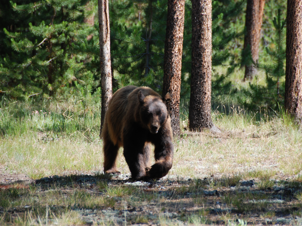 Take care to properly store your food to avoid campground encounters and protect bears.