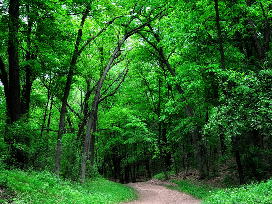The southern unit of Kettle Moraine State Forest is a popular road trip for trail runners.
