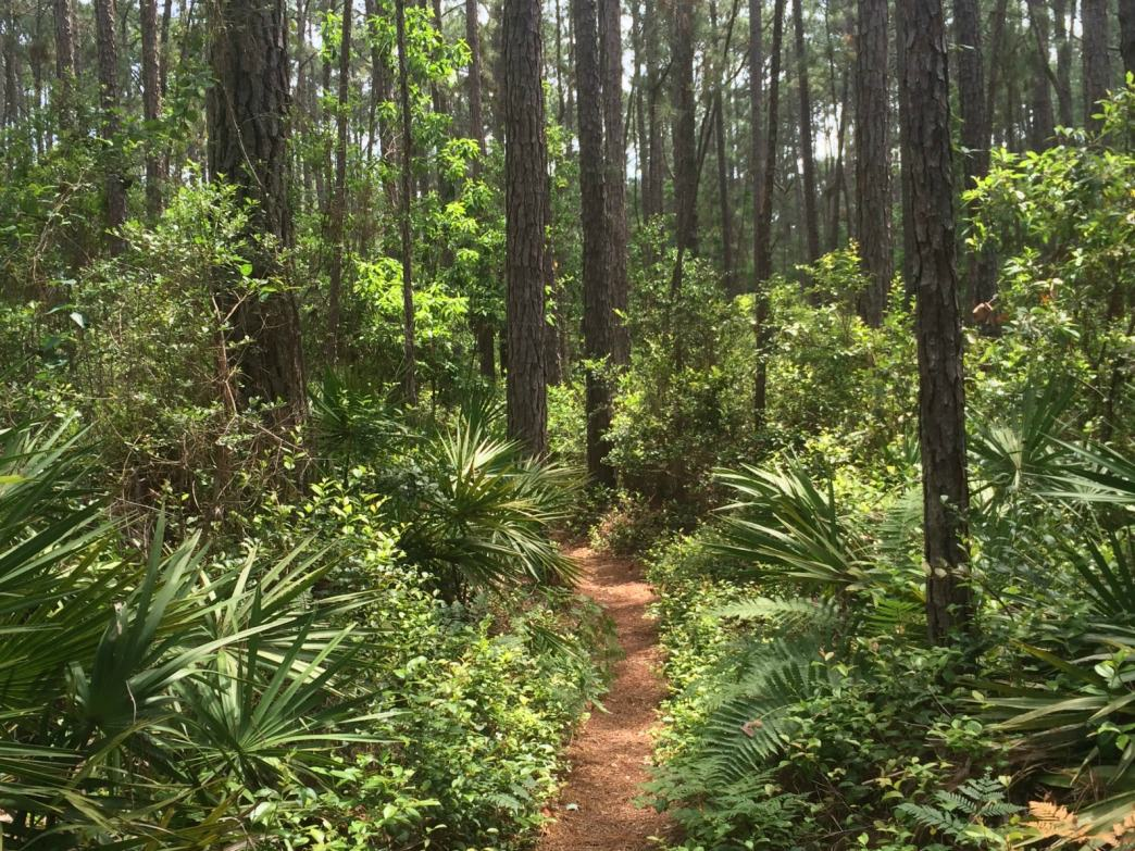 Heading into the trees at the Audobon Newhall Preserve in Hilton Head.