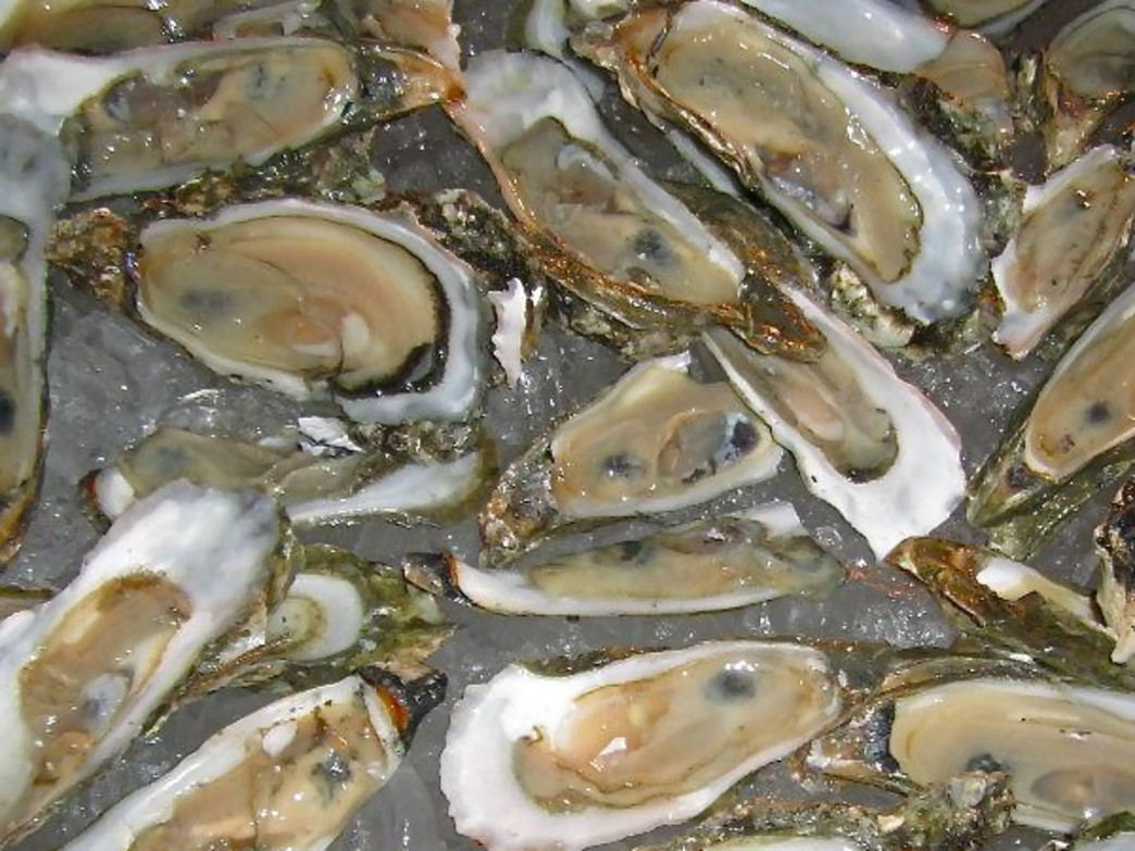 Hilton Head's local oysters are renowned for their delicious saltiness