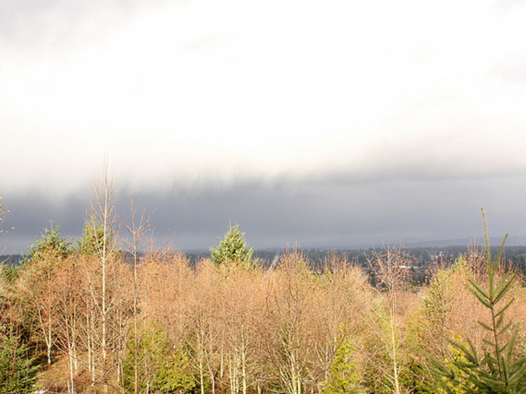 The natural surroundings on Powell Butte feel far removed from the urban surroundings.