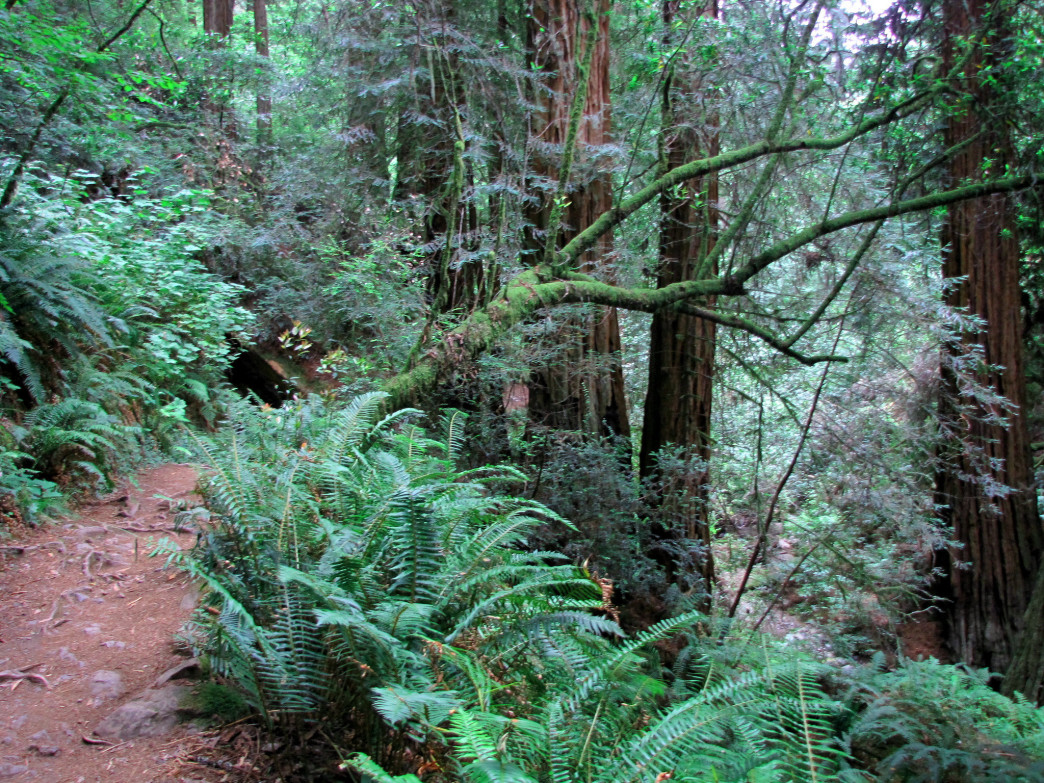 The trails of Mount Tamalpais have beckoned downhill daredevils since the early 1970s.