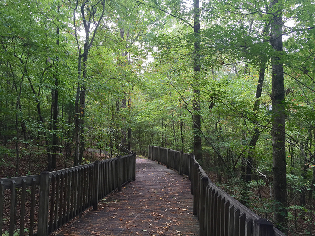 The tree-covered trail at Deerlick Creek Park.