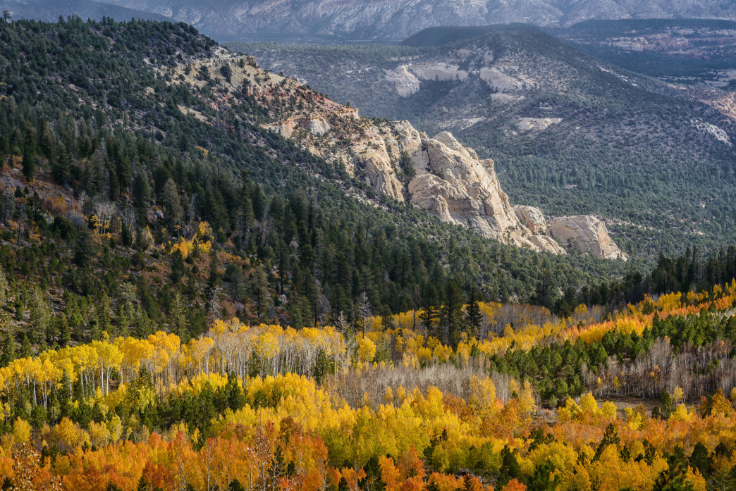 Early autumn in Utah's Dixie National Forest, near Zion National Park.
