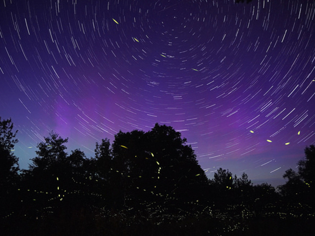 Summer in the Southeast brings fireflies and star-studded night skies.