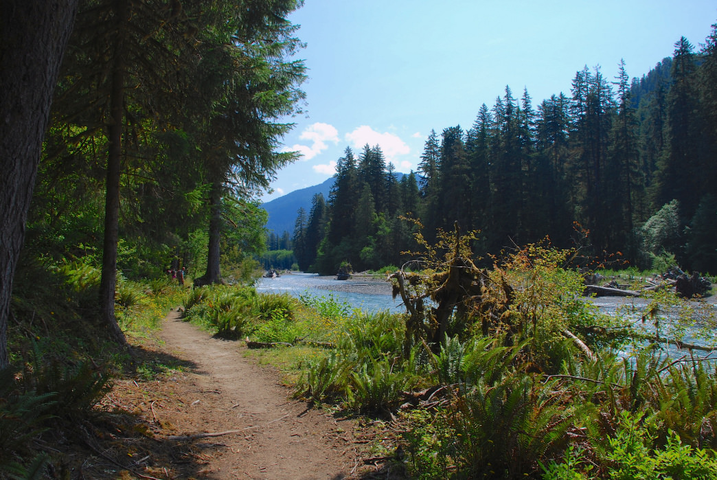 The Hoh River Trail is relatively flat for 13 of its miles through Olympic National Park.