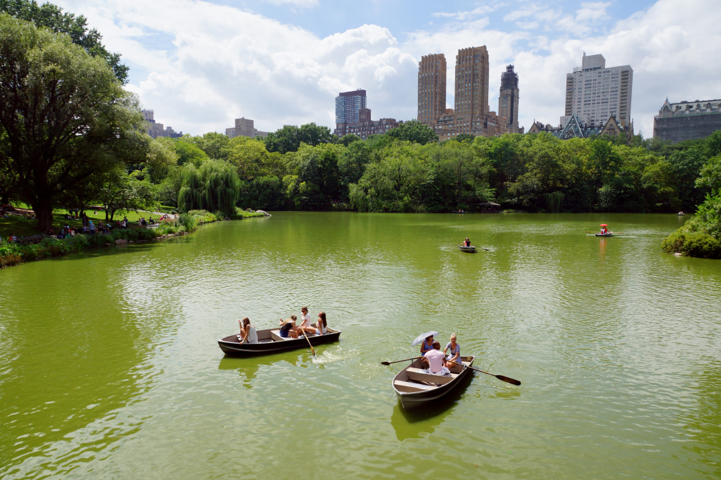 Grab a paddle to see Central Park in a whole new way.