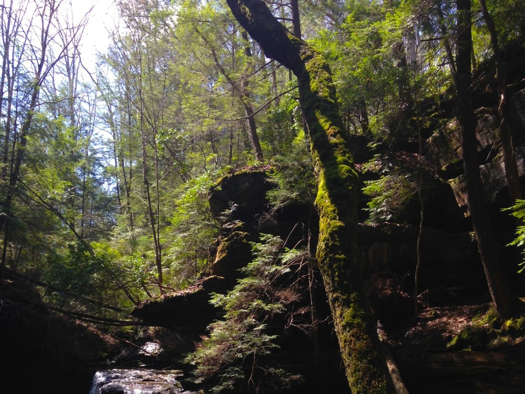 A tiny slice of the almost overwhelming lushness of Turkey Foot canyon and falls. Showing moss-covered trees and waterfall.