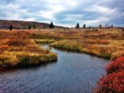 DOLLY SODS_WV_2_12-2015