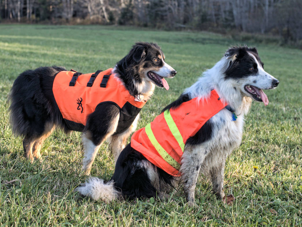 If you love to hike with your dog, don't forget their orange, too.