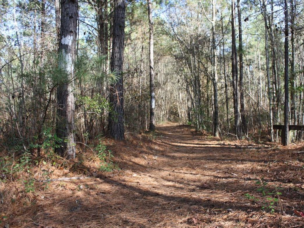 6 Tips for Thru-Hiking the Palmetto Trail