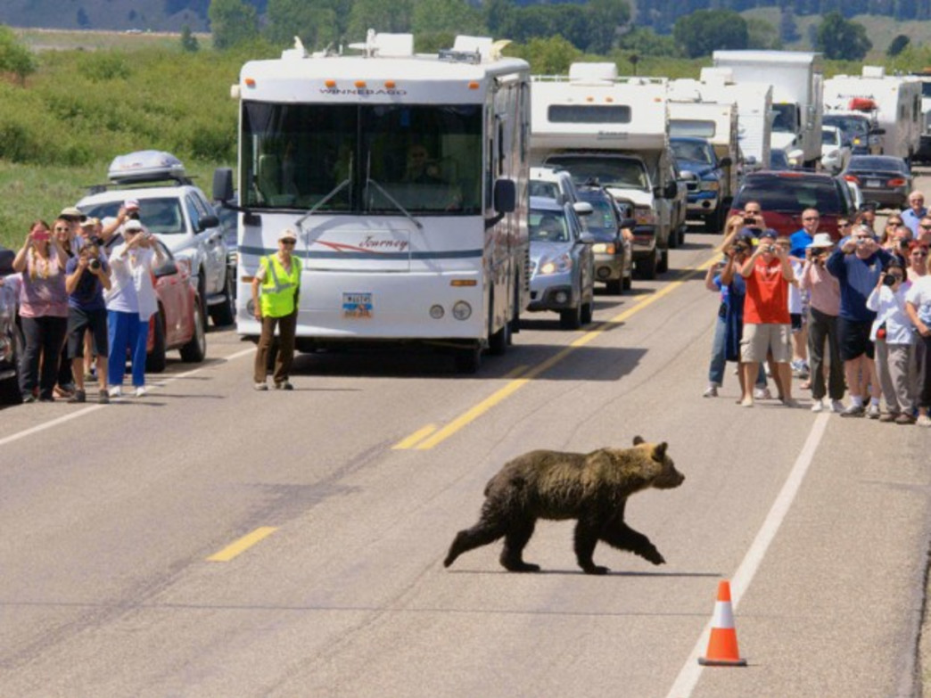 Bears have the right of way.
