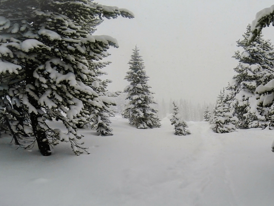 Powdery trees await on the Minturn Mile.