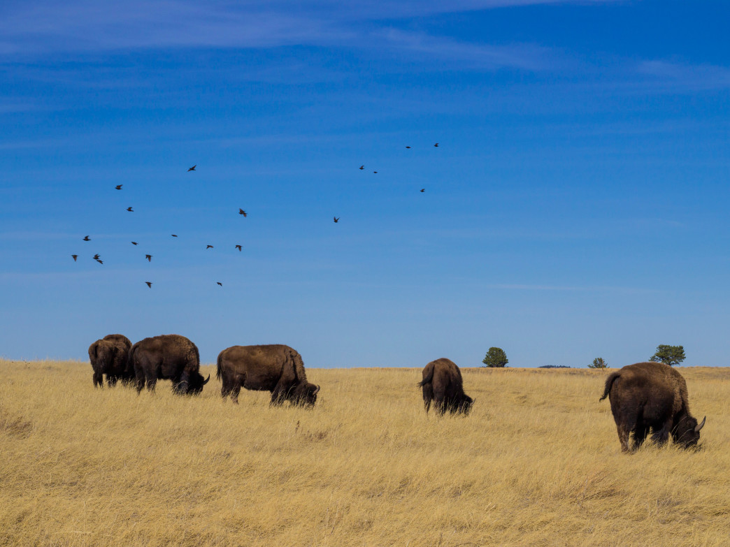 Hanging out with the locals at Wind Cave National Park.