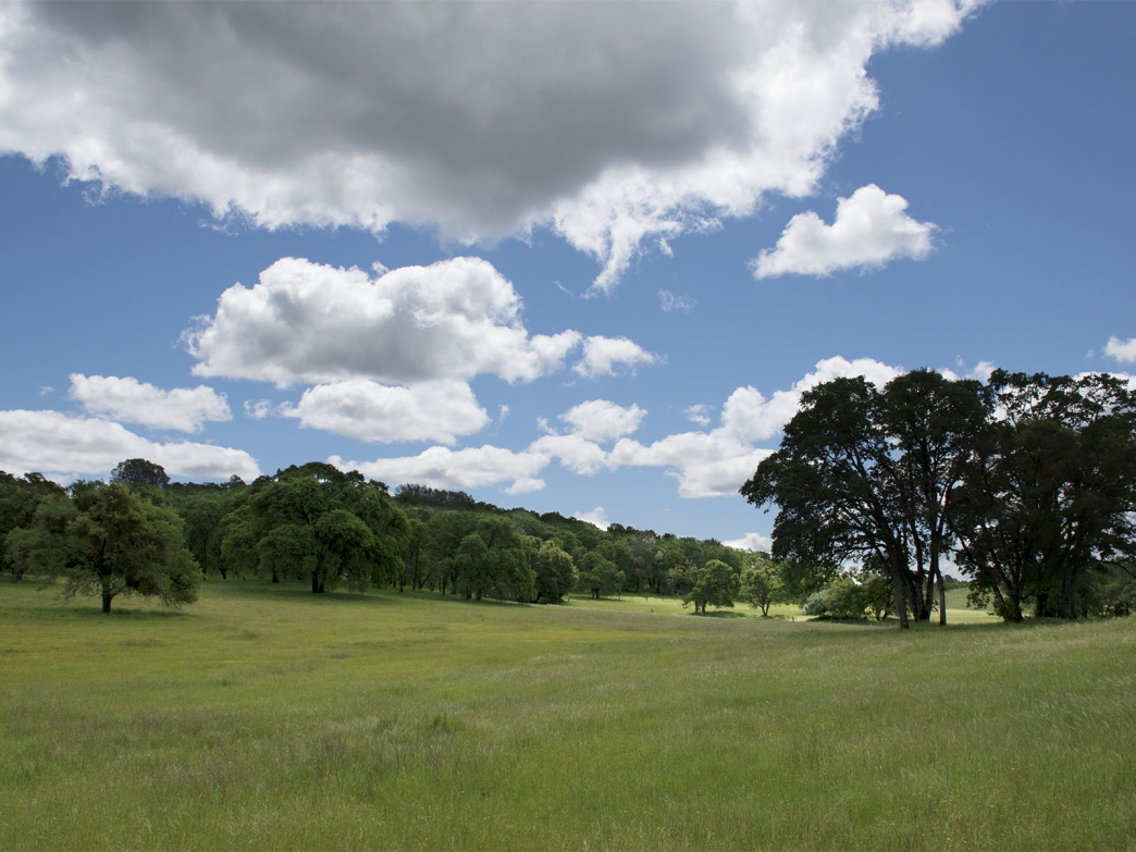 Sprawling meadows and oak trees top off Trainer Hill