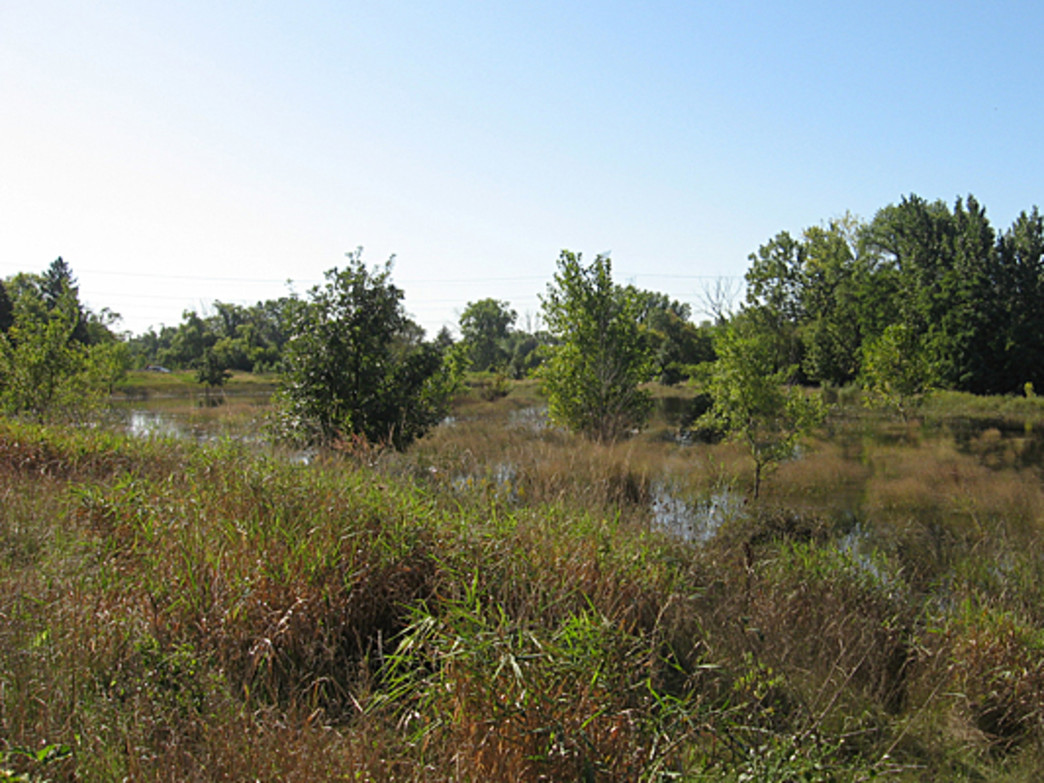 Cricket Creek Forest Preserve takes advantage of the trail along the Salt Creek.