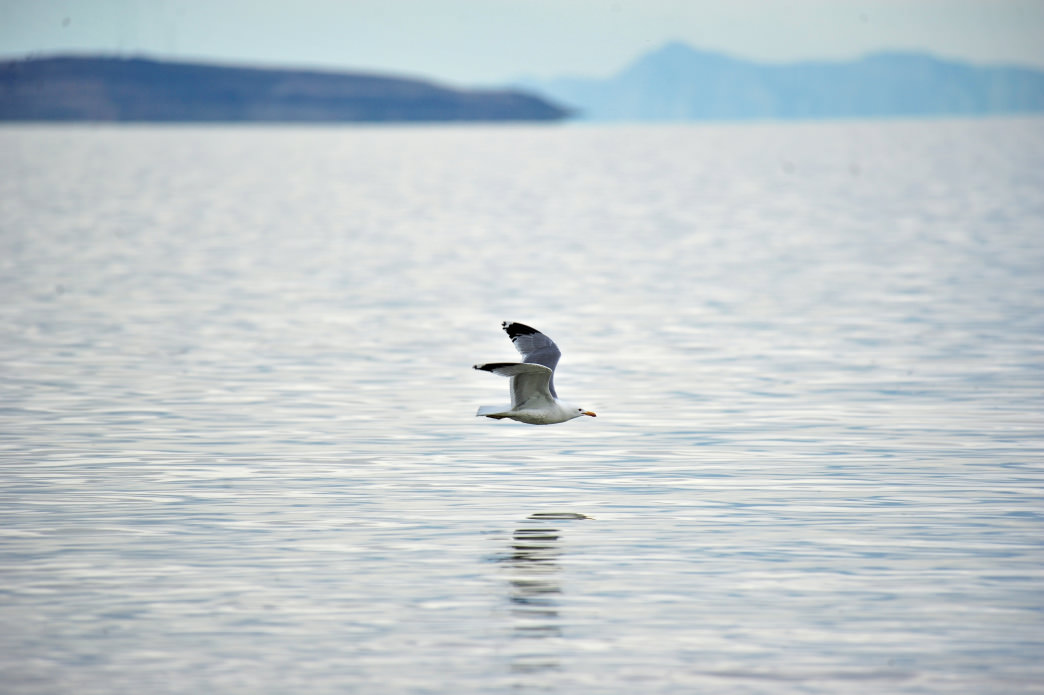 The Great Salt Lake, on the western edge of Davis County, attracts more than 2.5 million shorebirds.