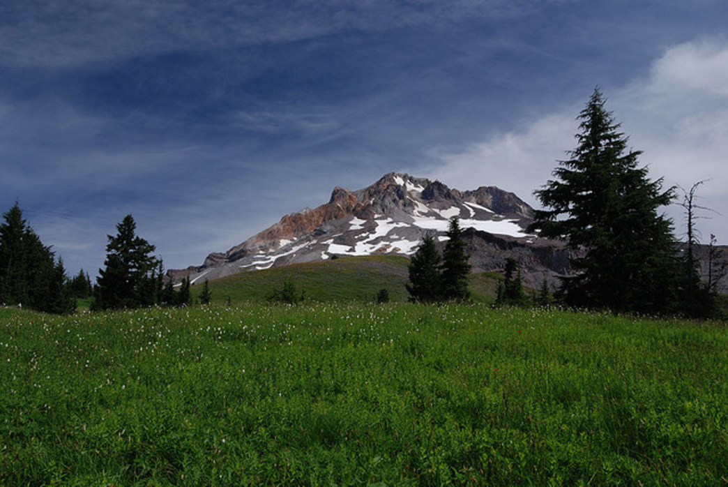 Paradise Park is home to both lush alpine meadows and pristine views of Mount Hood.