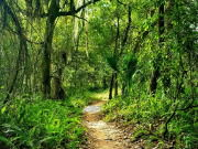 Alafia River State Park Trails