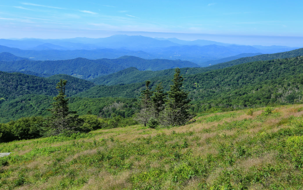 The Roan Highlands are known for their summer rhododendron blooms.