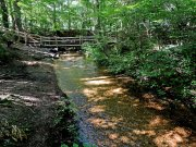 20170612_Tennessee_Chattanooga_Red Clay State Park_Hiking3