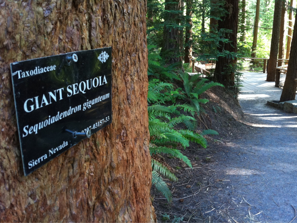 Hoyt Arboretum was where the record was broken.