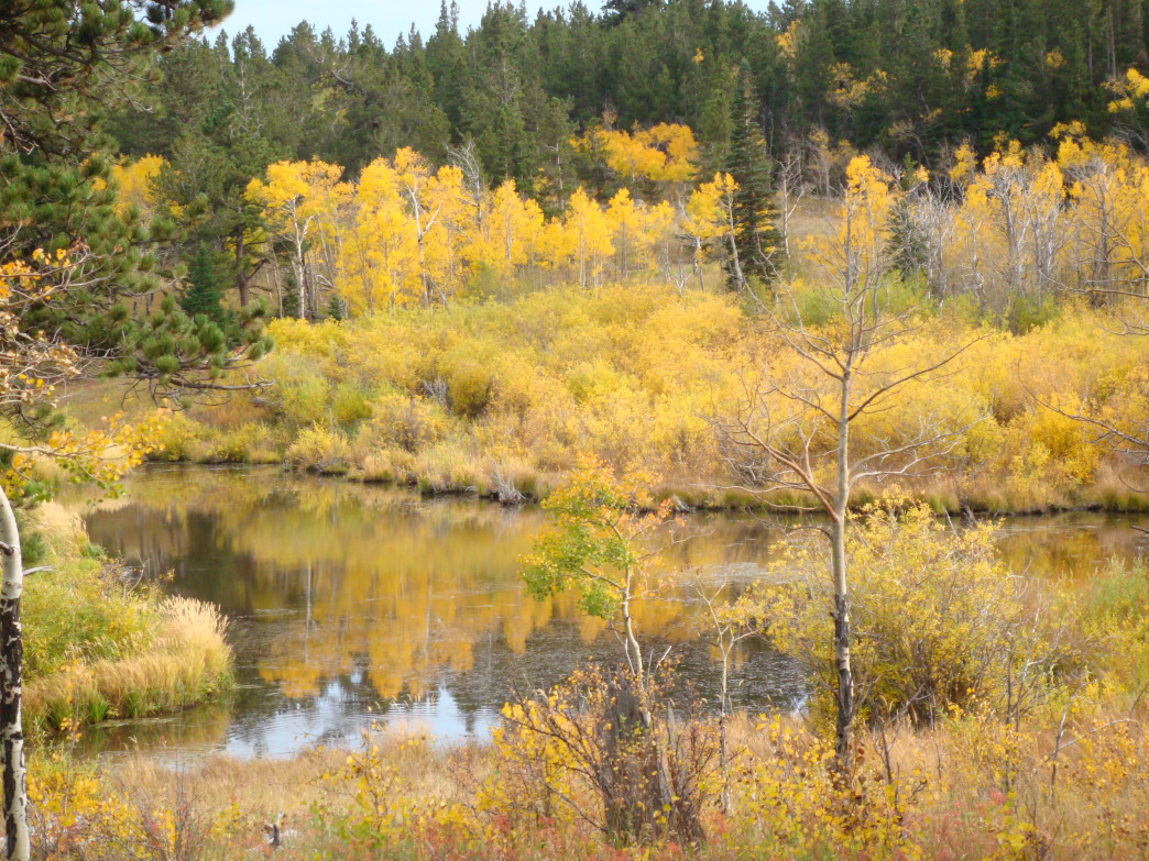 Aspens and willows erupt with fall color along the wetlands at Caribou Ranch.