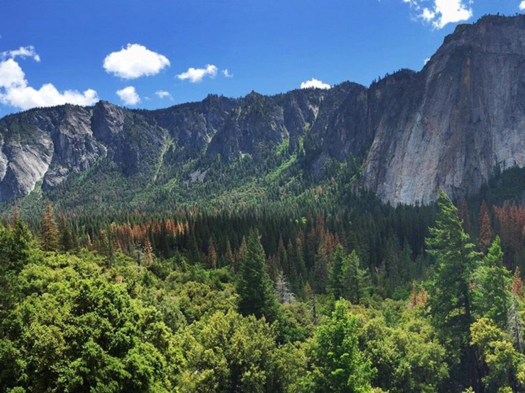 Checking out Yosemite Valley.