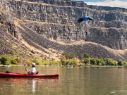 Image for Snake River Scenic Float